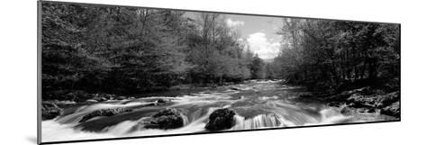 River Flowing Through Rocks in a Forest, Little Pigeon River--Mounted Photographic Print