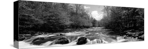 River Flowing Through Rocks in a Forest, Little Pigeon River--Stretched Canvas Print