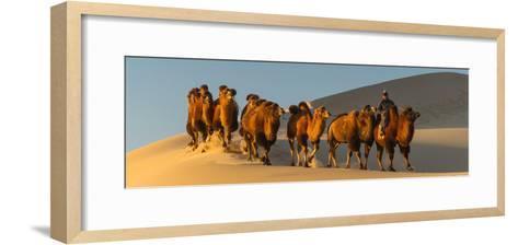 Camel Caravan in a Desert, Gobi Desert, Independent Mongolia--Framed Art Print