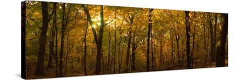 Trees in a Forest, Delnor Woods Park, St. Charles, Kane County, Illinois, USA--Stretched Canvas Print