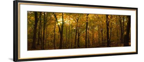Trees in a Forest, Delnor Woods Park, St. Charles, Kane County, Illinois, USA--Framed Art Print
