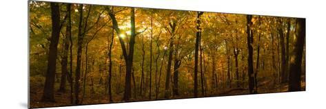 Trees in a Forest, Delnor Woods Park, St. Charles, Kane County, Illinois, USA--Mounted Photographic Print