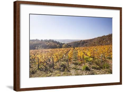 Autumn Colour in the Vineyards of Irancy, Yonne, Burgundy, France, Europe-Julian Elliott-Framed Art Print
