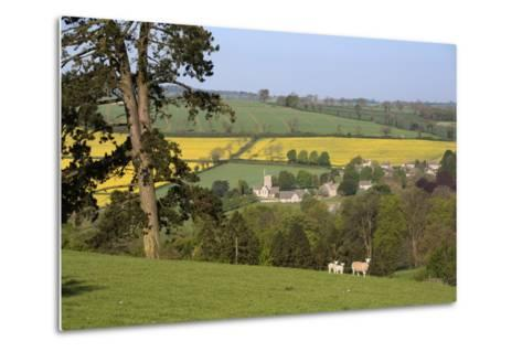 Oilseed Rape Fields and Sheep Above Cotswold Village, Guiting Power, Cotswolds-Stuart Black-Metal Print