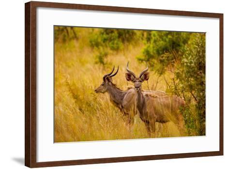 Wild African Deer, at Kruger National Park, Johannesburg, South Africa, Africa-Laura Grier-Framed Art Print