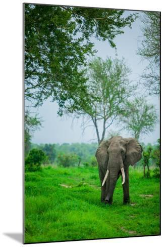 Elephant on Safari, Mizumi Safari Park, Tanzania, East Africa, Africa-Laura Grier-Mounted Photographic Print