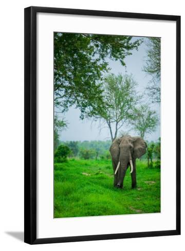 Elephant on Safari, Mizumi Safari Park, Tanzania, East Africa, Africa-Laura Grier-Framed Art Print