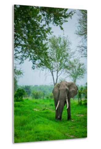 Elephant on Safari, Mizumi Safari Park, Tanzania, East Africa, Africa-Laura Grier-Metal Print