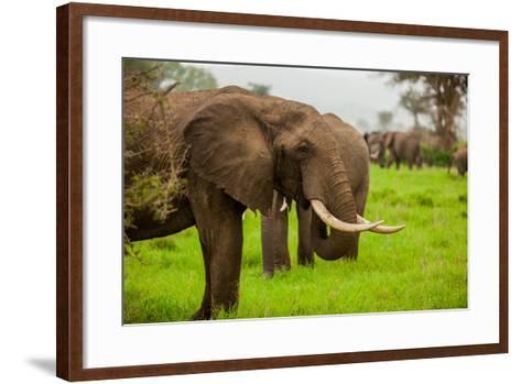 African Elephants on Safari, Mizumi Safari Park, Tanzania, East Africa, Africa-Laura Grier-Framed Art Print