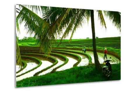 Terraced Rice Paddy in Ubud, Bali, Indonesia, Southeast Asia, Asia-Laura Grier-Metal Print