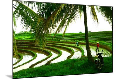 Terraced Rice Paddy in Ubud, Bali, Indonesia, Southeast Asia, Asia-Laura Grier-Mounted Photographic Print