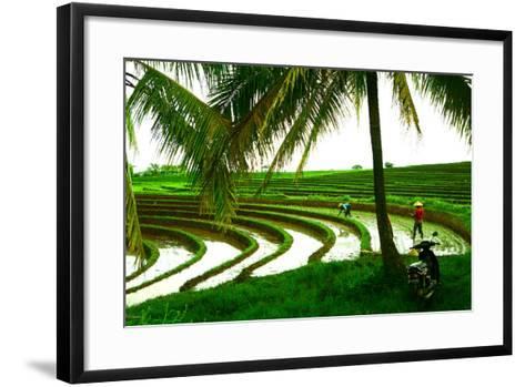 Terraced Rice Paddy in Ubud, Bali, Indonesia, Southeast Asia, Asia-Laura Grier-Framed Art Print