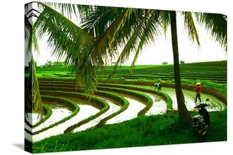 Terraced Rice Paddy in Ubud, Bali, Indonesia, Southeast Asia, Asia-Laura Grier-Stretched Canvas Print
