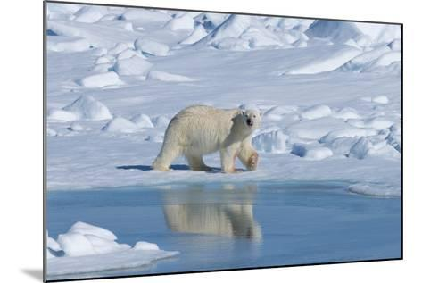 Male Polar Bear (Ursus Maritimus) Walking over Pack Ice, Spitsbergen Island, Svalbard Archipelago-G&M Therin-Weise-Mounted Photographic Print