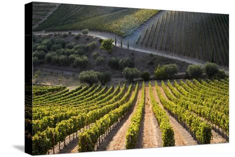 Rows of Grape Vines Ripening in the Sun at a Vineyard in the Alto Douro Region, Portugal, Europe-Alex Treadway-Stretched Canvas Print