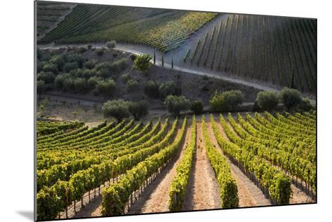 Rows of Grape Vines Ripening in the Sun at a Vineyard in the Alto Douro Region, Portugal, Europe-Alex Treadway-Mounted Photographic Print