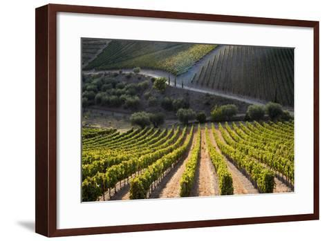 Rows of Grape Vines Ripening in the Sun at a Vineyard in the Alto Douro Region, Portugal, Europe-Alex Treadway-Framed Art Print