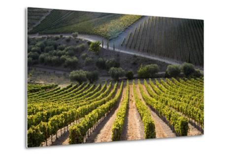 Rows of Grape Vines Ripening in the Sun at a Vineyard in the Alto Douro Region, Portugal, Europe-Alex Treadway-Metal Print