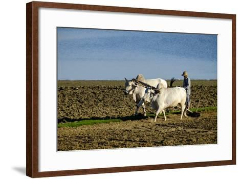 Farmer Ploughing His Field around Taungthman Lake, U Bein, Amarapura, Myanmar (Burma), Asia-Nathalie Cuvelier-Framed Art Print
