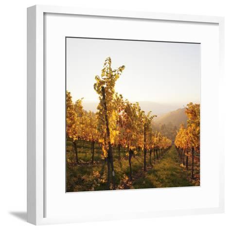 Vineyards in Autumn at Sunset, Stuttgart, Baden-Wurttemberg, Germany, Europe-Markus Lange-Framed Art Print