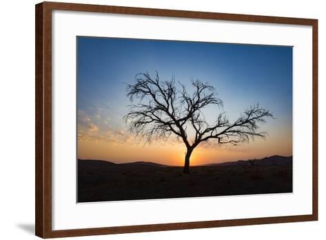Acacia Tree Near Dune 45 in the Namib Desert at Sunset, Sossusvlei, Namin-Naukluft Park-Alex Treadway-Framed Art Print