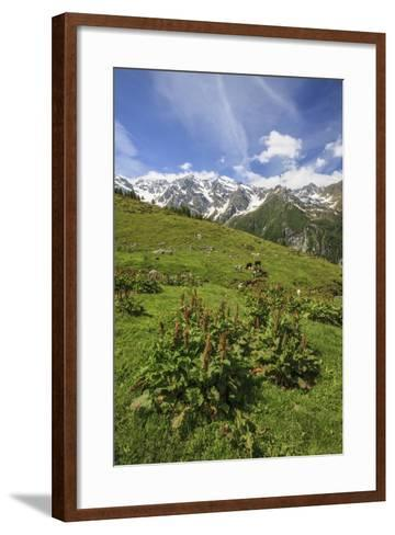 Green Meadows and Cows Grazing on a Sunny Summer Day, Orobie Alps, Arigna Valley-Roberto Moiola-Framed Art Print