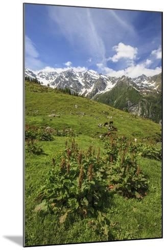 Green Meadows and Cows Grazing on a Sunny Summer Day, Orobie Alps, Arigna Valley-Roberto Moiola-Mounted Photographic Print