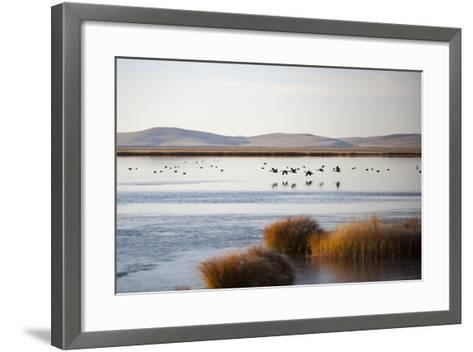 Huahu (Flower Lake), an Important Sanctuary for Birds, Sichuan, China, Asia-Alex Treadway-Framed Art Print