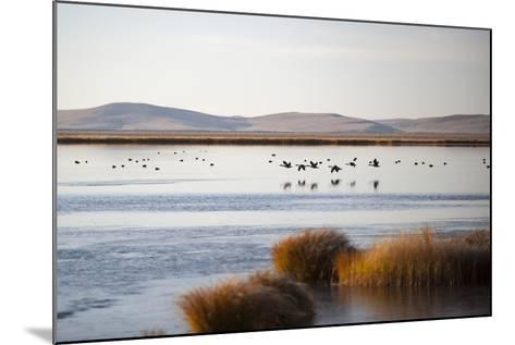 Huahu (Flower Lake), an Important Sanctuary for Birds, Sichuan, China, Asia-Alex Treadway-Mounted Photographic Print