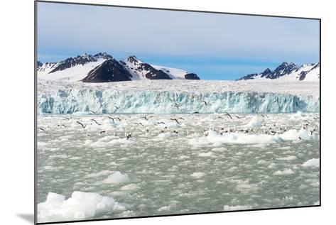 Black-Legged Kittiwakes (Rissa Tridactyla) on Ice Floe, Lilliehook Glacier in Lilliehook Fjord-G&M Therin-Weise-Mounted Photographic Print