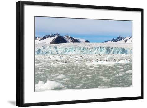Black-Legged Kittiwakes (Rissa Tridactyla) on Ice Floe, Lilliehook Glacier in Lilliehook Fjord-G&M Therin-Weise-Framed Art Print