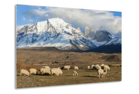 Sheep, Torres Del Paine National Park, Patagonia, Chile, South America-Pablo Cersosimo-Metal Print