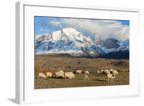 Sheep, Torres Del Paine National Park, Patagonia, Chile, South America-Pablo Cersosimo-Framed Art Print