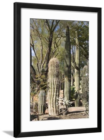 Cactus-Natalie Tepper-Framed Art Print