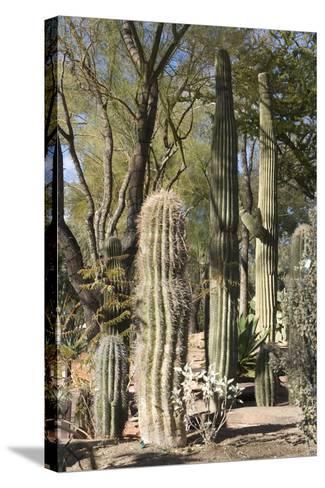 Cactus-Natalie Tepper-Stretched Canvas Print