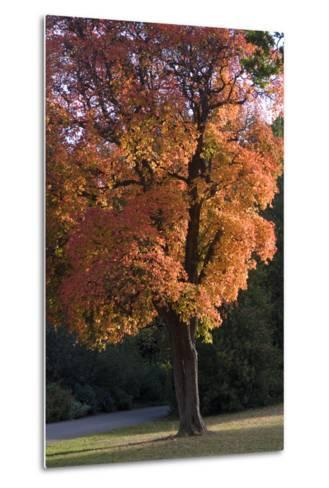 Autumn Trees-Natalie Tepper-Metal Print