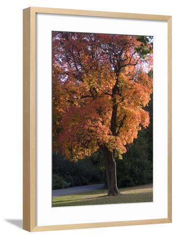 Autumn Trees-Natalie Tepper-Framed Art Print