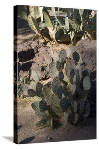 Cactus-Natalie Tepper-Stretched Canvas Print