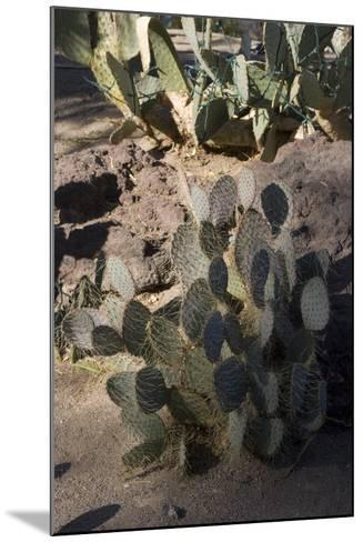 Cactus-Natalie Tepper-Mounted Photo