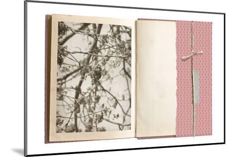 Field Notes 7-Art Kitchen-Mounted Premium Giclee Print