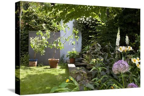 Suburban Garden Detail, Kingston Upon Thames, England, UK-Richard Bryant-Stretched Canvas Print