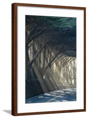 County Road with Sunlight Filtering in Through the Trees, Mendocino, California, Usa-Natalie Tepper-Framed Art Print
