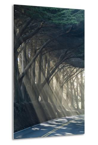 County Road with Sunlight Filtering in Through the Trees, Mendocino, California, Usa-Natalie Tepper-Metal Print