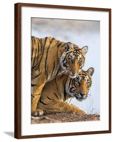 India Rajasthan, Ranthambhore. a Female Bengal Tiger with One of Her One-Year-Old Cubs.-Nigel Pavitt-Framed Art Print