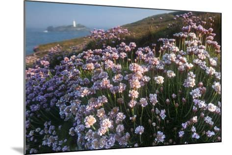Coastal Cliffs, Godrevy Point, Nr St Ives, Cornwall, England-Paul Harris-Mounted Photographic Print