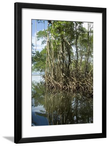 Mangrove, Los Haitises National Park, Dominican Republic-Natalie Tepper-Framed Art Print