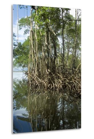 Mangrove, Los Haitises National Park, Dominican Republic-Natalie Tepper-Metal Print