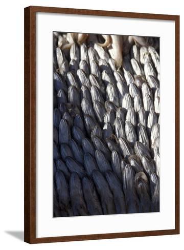 Fish, Market Stall, Essaouira, Morocco-Natalie Tepper-Framed Art Print