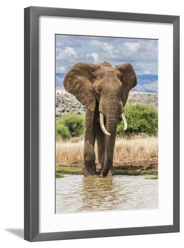 Kenya, Meru County, Lewa Conservancy. a Bull Elephant at a Waterhole.-Nigel Pavitt-Framed Art Print