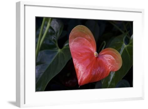 Anthurium Flower on Display, London, England-Natalie Tepper-Framed Art Print